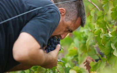 winetours10-1024x682